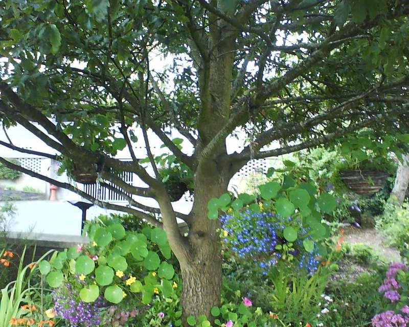 Сад: Что можно сажать под яблоней