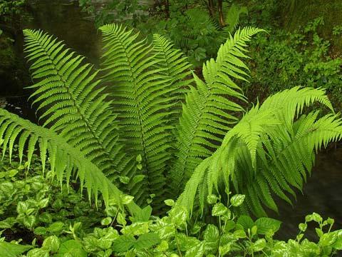 Сад: Что можно посадить под вишней