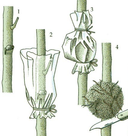 Сад: Воздушные отводки