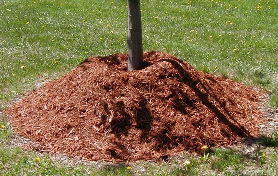 Сад: Мульчирование приствольного круга