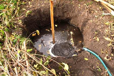Сад: Полив ямы для вишни