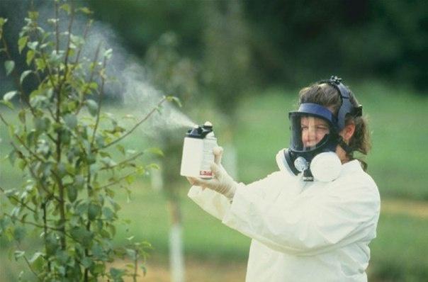 Сад: опрыскивание вишни