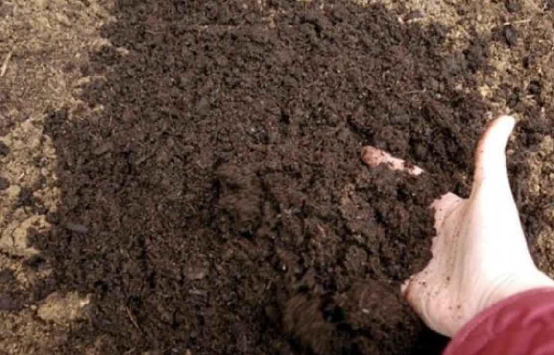 Огород: Внесение органических удобрений под свеклу