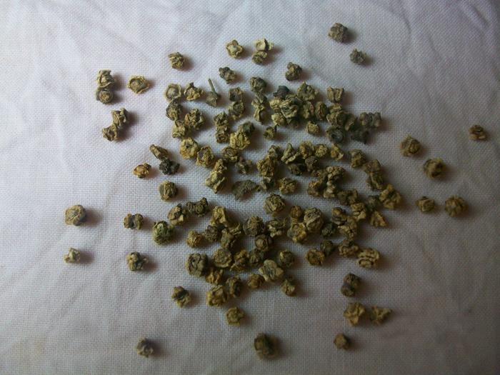 Огород: Семена свеклы