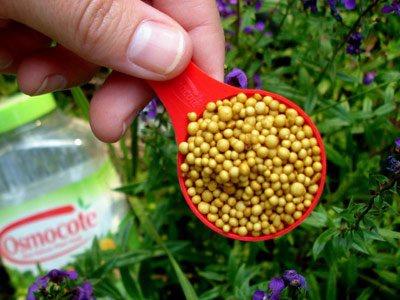 Огород: Удобрение для свеклы
