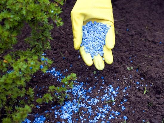 Цветы и клумбы: Гранулированные удобрения для канн