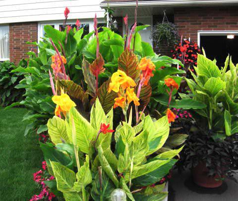 Цветы и клумбы: Канны