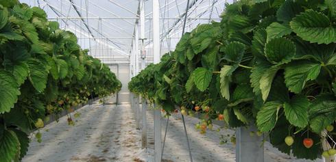 Техника и инструменты для дачи: Выращивание клубники на гидропонике