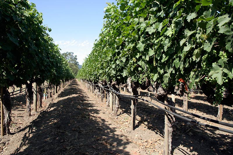 Техника и инструменты для дачи: Капельный полив винограда
