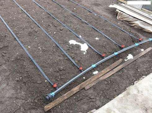 Техника и инструменты для дачи: Укладка капельной ленты