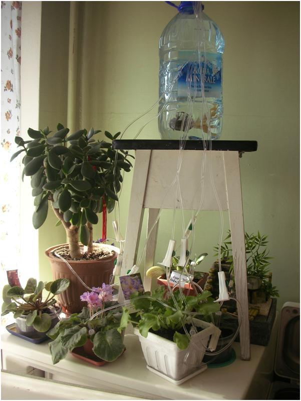 Техника и инструменты для дачи: Капельный полив домашних растений