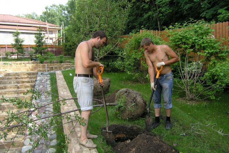 Сад: ошибки садоводов