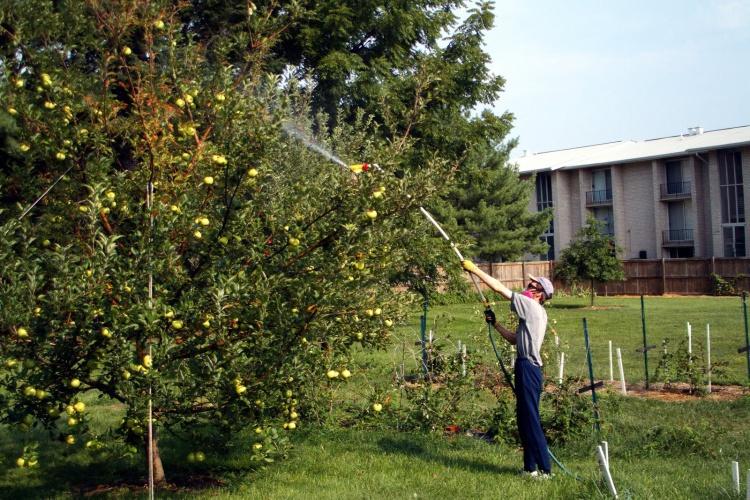 Сад: осенняя обработка