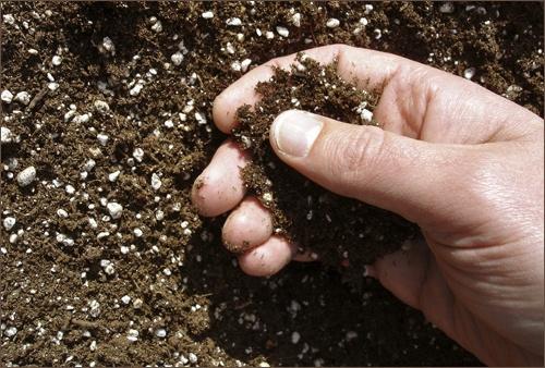 Сад: удобрения