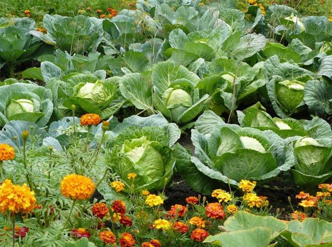 как вывести мох в огороде: