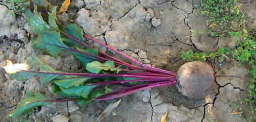 Огород: грунт