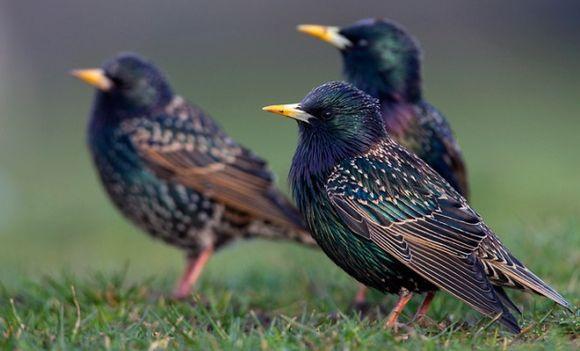Огород: птицы