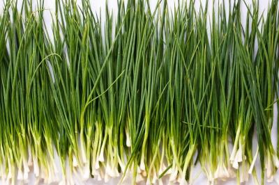 Огород: Блог дачника. Natalya: сорт зеленого лука