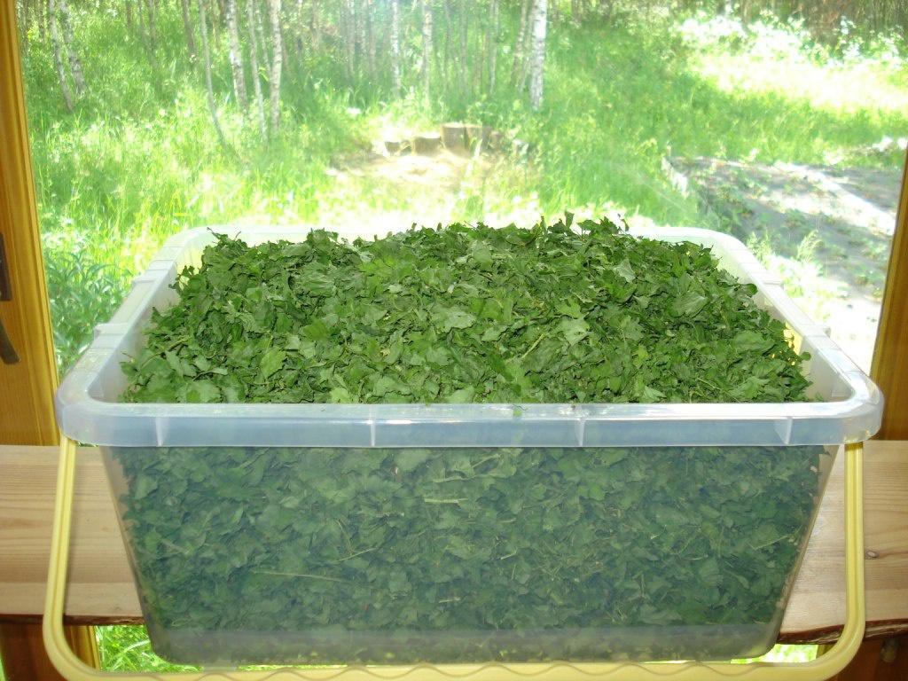 Огород: сушеный лук