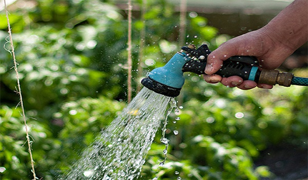 Огород: полив перца