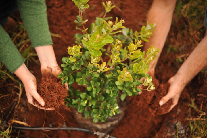 Декоративные растения: правила пересадки