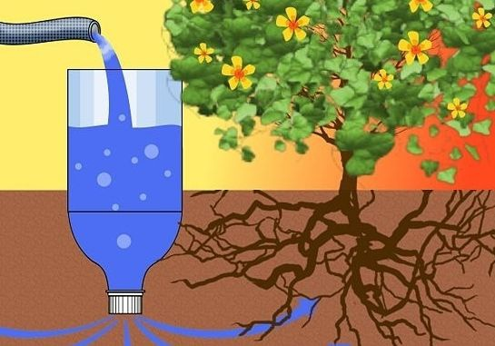Декоративные растения: полив