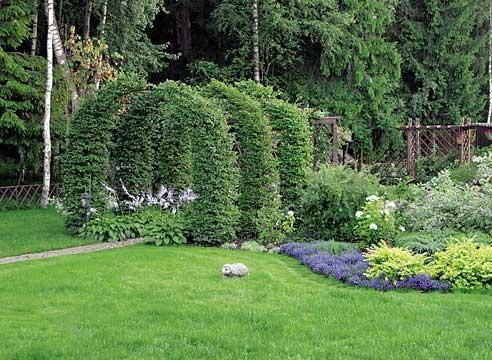 Декоративные растения: арка из дерена
