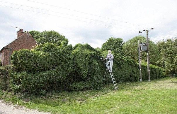 Декоративные растения: декоративная стрижка