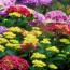 Многолетние цветы для клумбы на даче и в саду