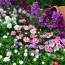 Как украсить дачный участок цветами — фото с описанием