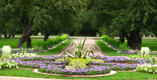 Низкорослые цветы для клумбы: описание и фото