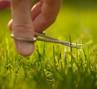 Способы стрижки газона у себя на даче