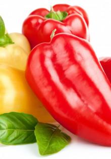 Чем опрыскивать болгарский перец от болезней и вредителей