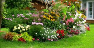 Какие выбрать цветы для своей дачной клумбы